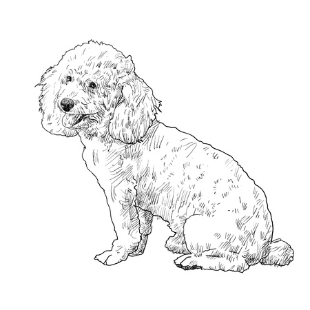 shihtzu: Shihtzu dog is sitting and looking aside Illustration