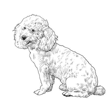 aside: Shihtzu dog is sitting and looking aside Illustration