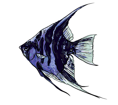 originate: Angel fish,Pterophyllum species originate from the Amazon Rive