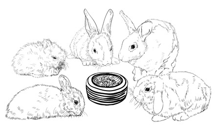 Rabbits waiting ot eat their food by surrounding food bowl Illustration