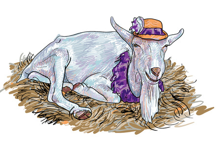 lay down: The goat that wear hat  lay down on haystack
