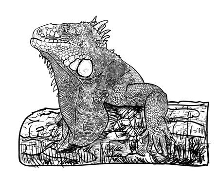 vertebrate: Drawing of lizard holding on the log