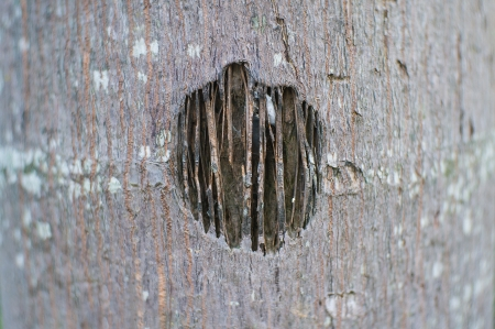 splinter: The hole on the bark tree that show splinter inside. Stock Photo