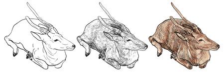 crouching: The drawing of crouching brown deer