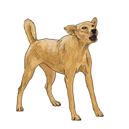 barking: il cane sta abbaiando come vedere un estraneo