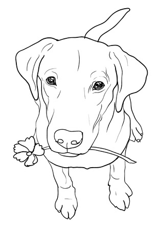Young labrador retriever is sitting and hold flower in the mouth