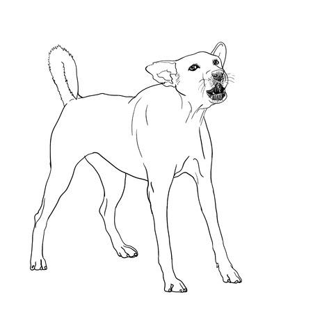 stranger: the dog is barking like seeing a stranger