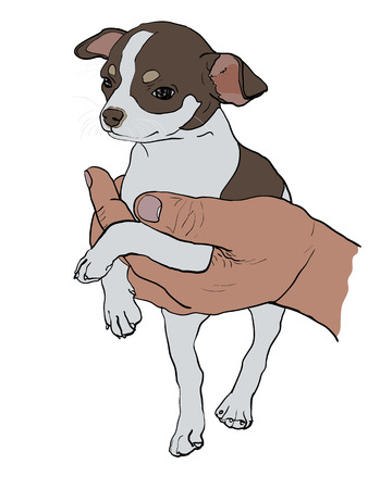 chihuahua: The drawing of chihuahua in human hand Illustration