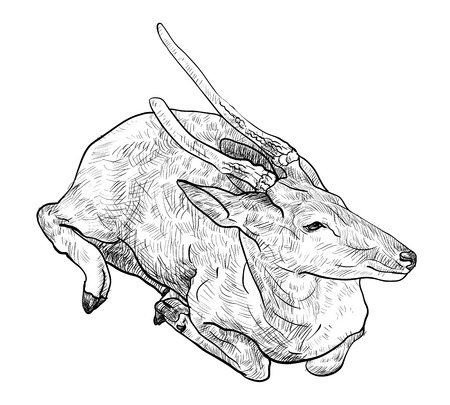 crouch: The drawing of crouching brown deer