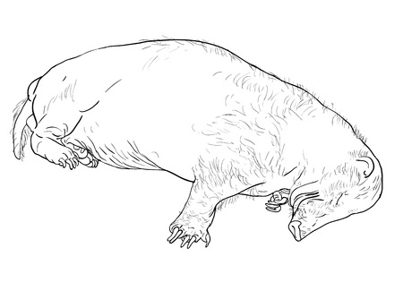 The drawing of sleeping hog badger Vector