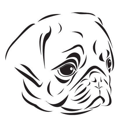 pug puppy: The line art of pug head