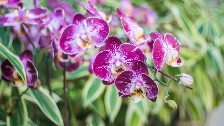 The orchid flowers