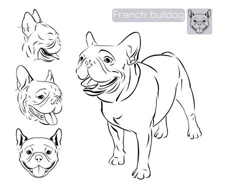 frans: Lijn kunst van Franse buldog met drie verschil van gezicht Stock Illustratie