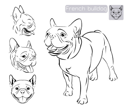 dog ears: Line art of french bulldog with three difference of face