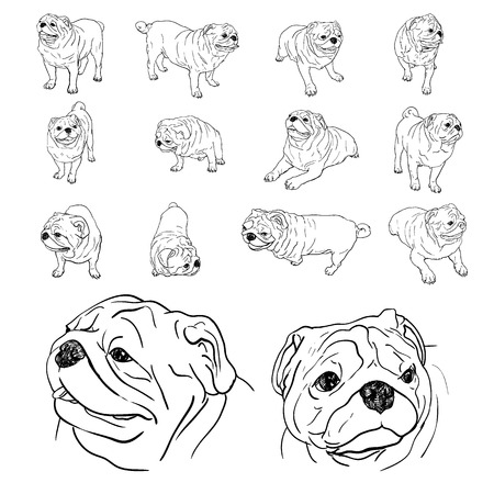 Drawing set of pug in many pose Illustration