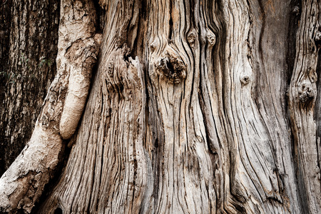 Texture and surface of big old tree in vintage style