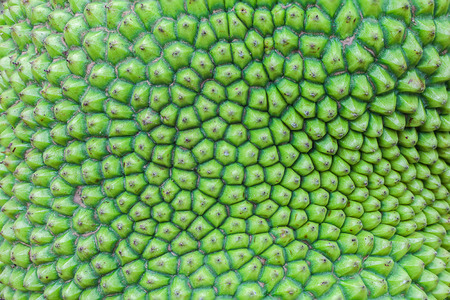 Texture and pattern of jack fruit peel photo