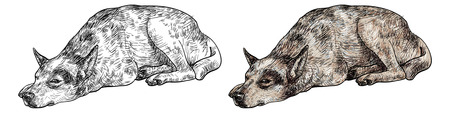 express feelings: Drawing of laying dog express lonely in its eye