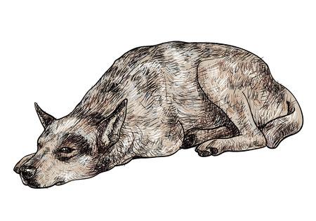 homelessness: Disegno di posa cane esprime solitario nel suo occhio