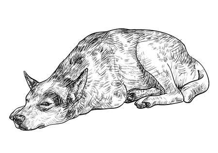 homelessness: Drawing of laying dog express lonely in its eye