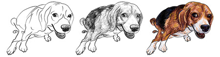 pooping: Cute beagle pooping with funny pose and eye contact Illustration
