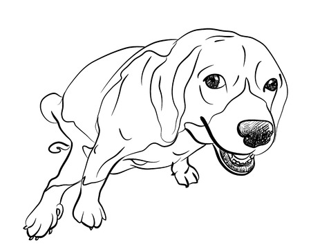 defecate: Cute beagle pooping with funny pose and eye contact Illustration