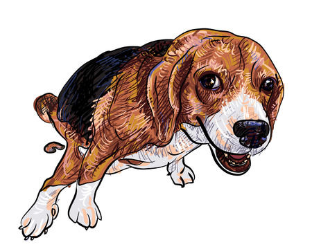 Cute beagle pooping with funny pose and eye contact Vector
