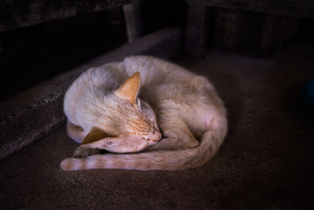 Thin yellow cat sleeping under table photo