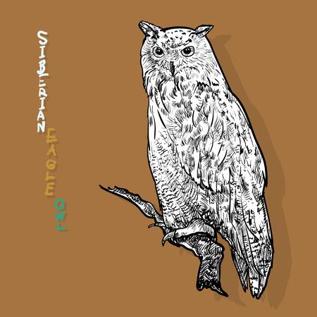 siberian: Siberian eagle owl, or Bubo bubo sibiricus.vector Illustration