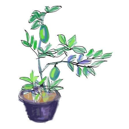 citrus tree: Sketch vector of lemon grow in pot on white background Illustration