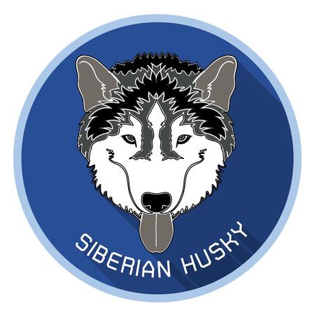 �siberian husky�: Head of siberian husky with long shadow on blue circle background