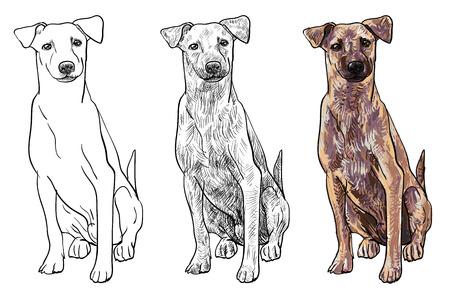 devanear: Sentado cão marrom olhar curioso como assistir a algo