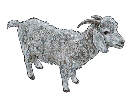 Sketch vector of angora goat on white background Vector