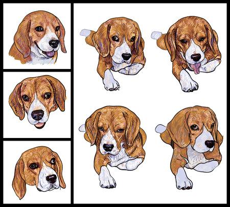 Set of adorable Beagle on white background