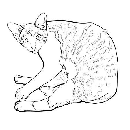 Laying down cat looking up curiously.vector illustration