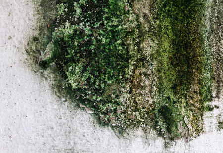 Texture cement wall background with moss photo