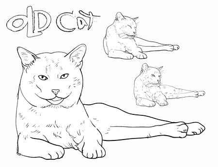 devanear: Old yellow cat laying with three different face