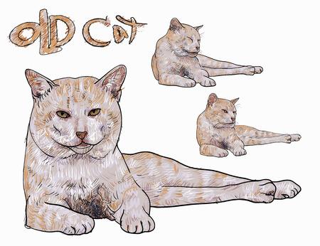 devanear: Gato amarelo velho que coloca com três cara diferente Ilustração