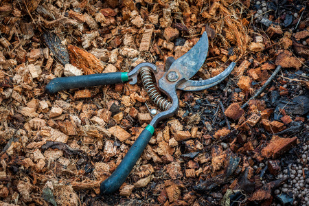 pruning shears: Old used pruning shears on coconut coir fiber