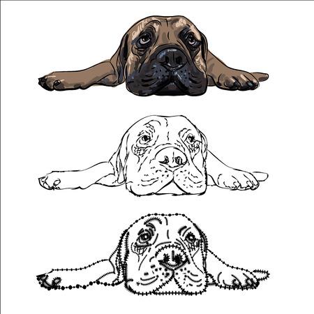 Drawing of  lying bull mastiff on white background