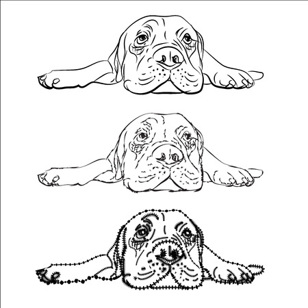 mastiff: Drawing of  lying bull mastiff on white background