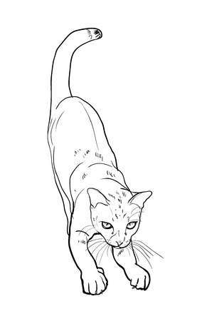 cat stretching: Adorable cute cat stretching body on white background Illustration