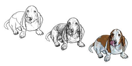 basset hound: Adorable perro basset hound sentado y se adhieren a cabo es la lengua en blanco Vectores