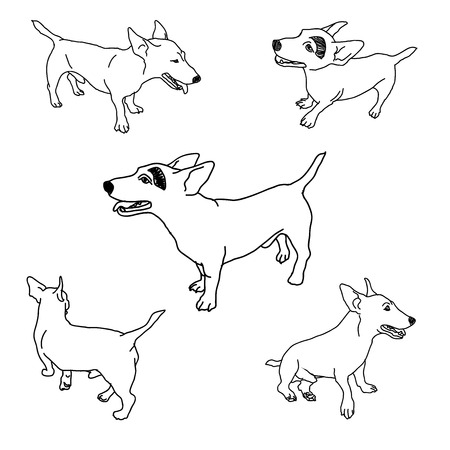 jack russell: Drawing set of adorable jack russell on white background