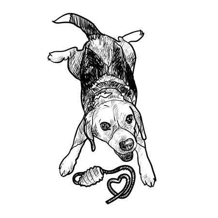 cheerfully: Adorable puppy beagle cheerfully playing toy Illustration
