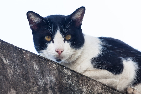 Adorable cat laying on top of cement wall Stock Photo