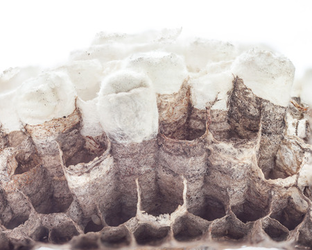 Hornets nest on white background
