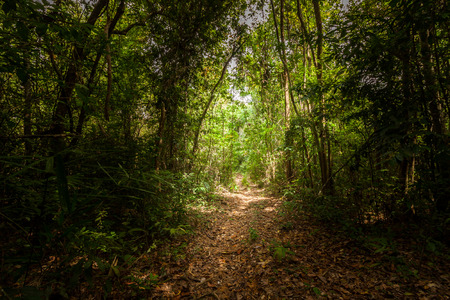 Walk way in the forest in southern of Thailand