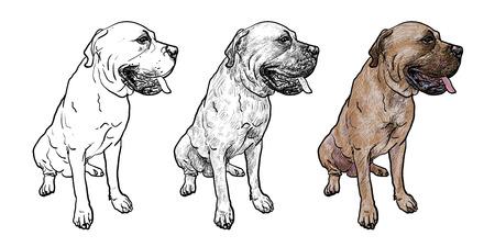 Drawing of mastiff dog on sitting pose on white background