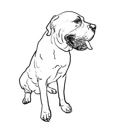 mastiff: Drawing of mastiff dog on sitting pose on white background